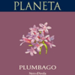 Plumbago 2014 Planeta lt.0,75